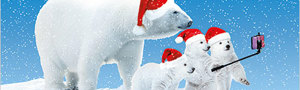 Christmas cards x10: Polar Portrait